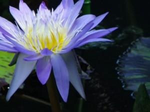 シルバーバーチの霊訓1