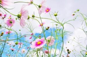 人の心に、いつも花を咲かせることが、自分の使命だと思って生きててごらん。そしたらね。神様がごほうびくれるよ。