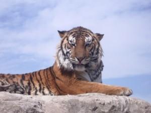 人生は野生の虎のようなものだ。あなたはそこに横になって、頭の上を虎に前足で押さえ付けられるのを許すか、あるいは、背中の上にまたがって、それを乗りこなすかだ。【野生の虎に乗れ】