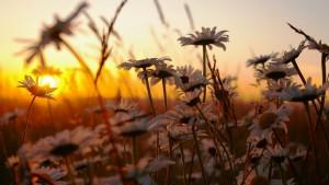 明日という日は永久に来ない。常に今日、今、目の前の人を大事にし、今、目の前のことを大事にし、やるべきことをひたすら大事にやっていく。人生はただそれだけである。【小林正観】